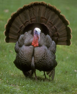 """12.) """"That turkey"""""""