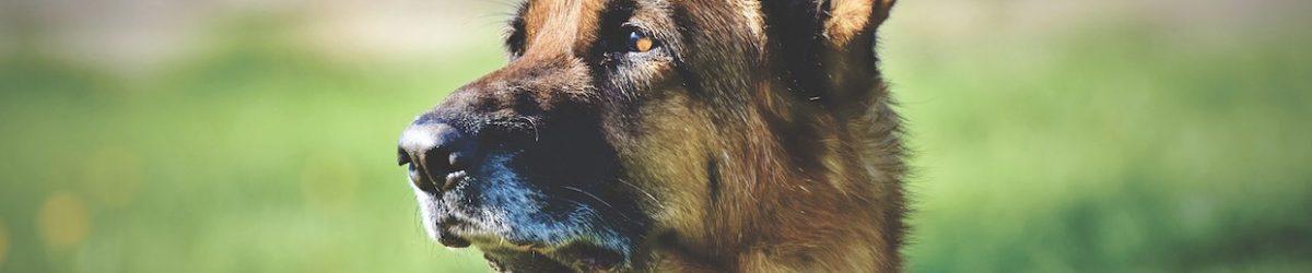 Biden's Dog Joins GC Security