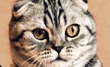 Adventist Cat Busted For Eating Unclean Mouse